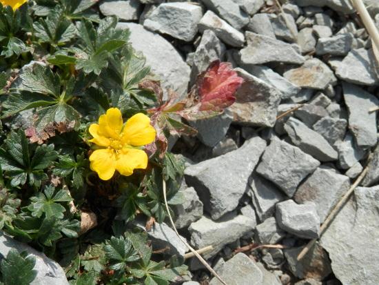 fiore-zoldo-punta