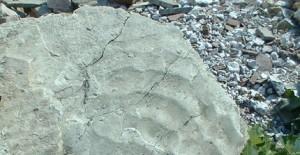 """La sabbia di 250 milioni di anni fa """"congelata"""" dal tempo geologico nelle tipiche ondulazioni che oggi si vedono sulla battigia lungo le coste dell'Adriatico."""