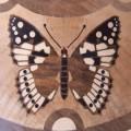 farfalla_blog_mattiuzzi