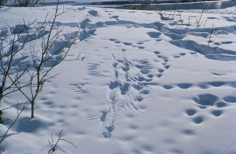 ali_in_the_snow