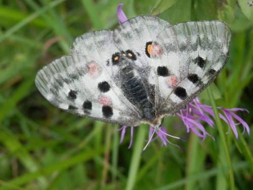 farfalla_zoldo