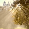 luce_albero_blog