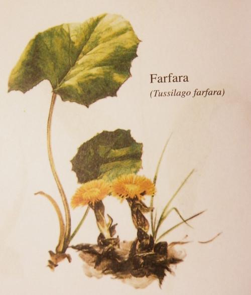 farfaro-4