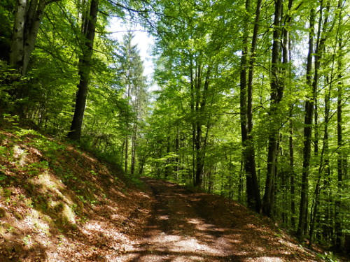 bosco-secolare-zoldo-astragal-villa