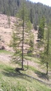 albero-che-resiste-e-si-adatta
