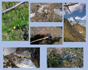 collage-natura-2016