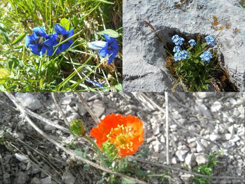 tivan-fiori-zoldo