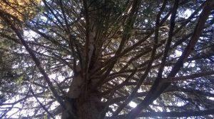 albero_dai_mille_rami_eliana_santin_2016