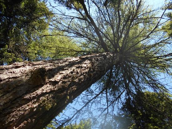 albero-zoldo