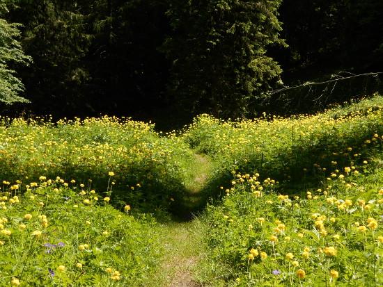 sentiero-duran-zoldo