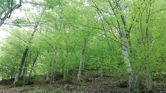 bosco-faggi-soffranco