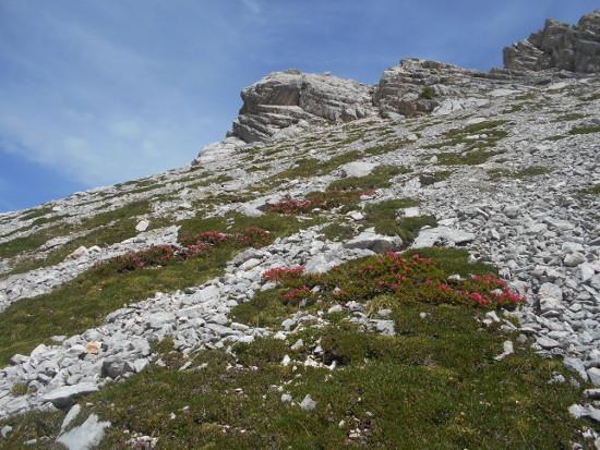 rododendri-zoldo-pelmo