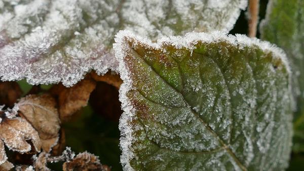 foglie-brina