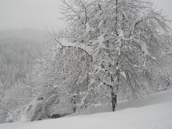 alberi-neve-zoldo