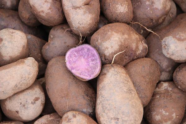 patata-viola